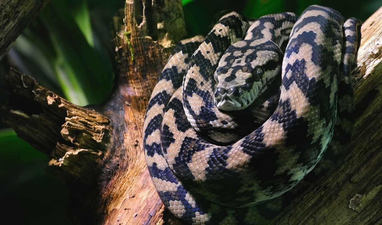 snake, jpeg, змеями, количество, змеи,