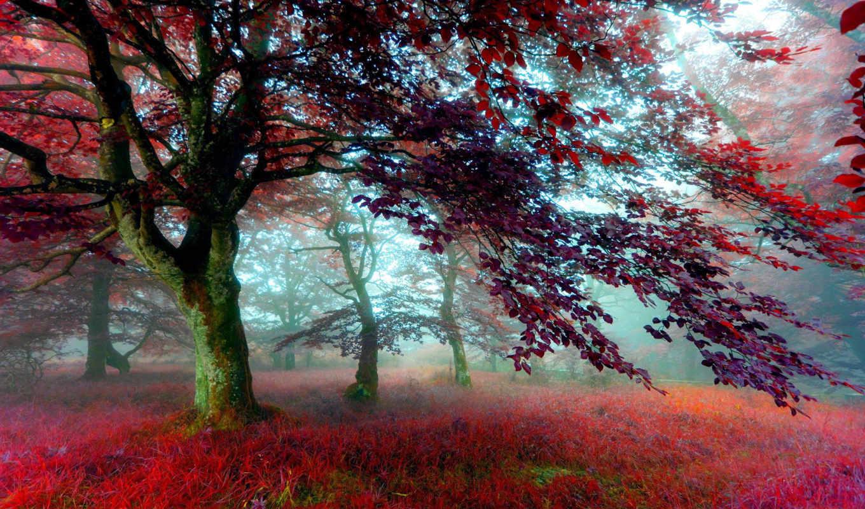 деревя, лес, mist, осень, трава, листва, картинка, дерево, природа, листья,