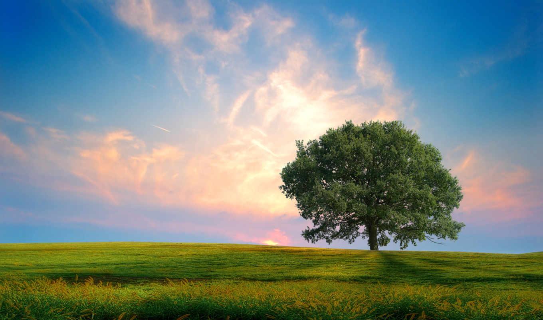 нота, дерево, закат, природа, one, high, hill, fresh,