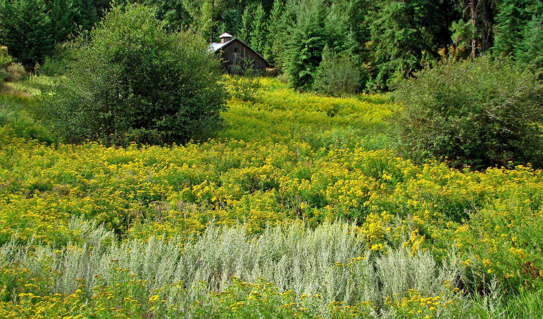 scenery, fields, nature, wallpapers, природа, wallpaper,