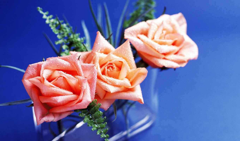 roses, lovely, роза, best,