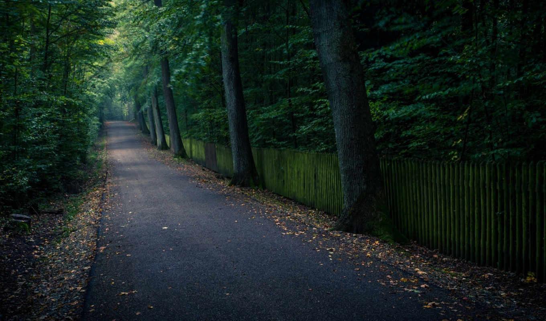 природа, тропинка, только, оригинал, пользователей, избранное, добавили, зарегистрирован, деревя, скачиваний, добавил,