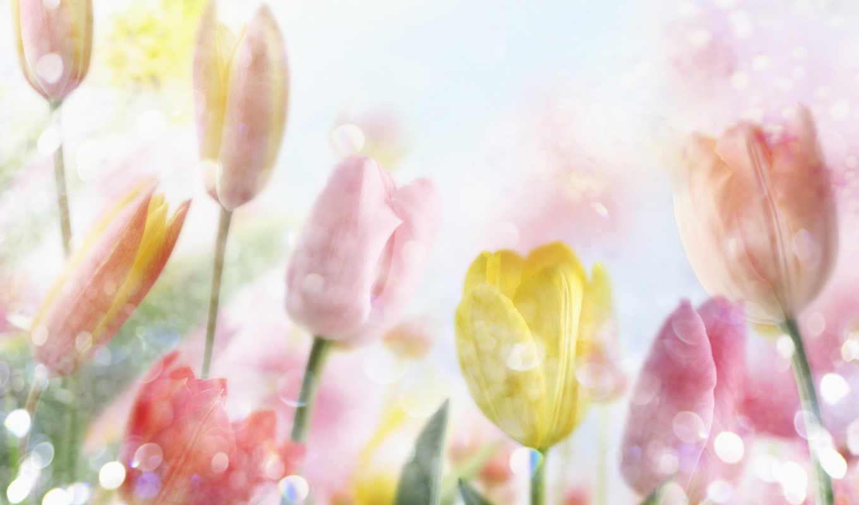 ,цветы,, flowers, цветов, тюльпаны,,