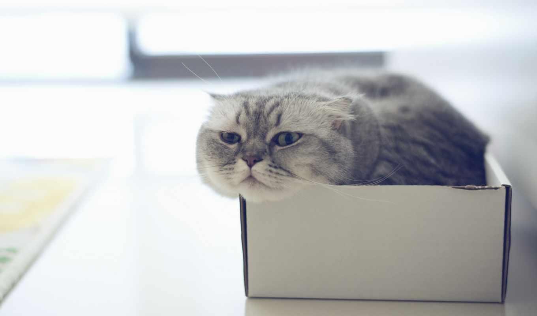 кошек, how, кошки, необычные, способности, video, кошке, кот, писает, коты,