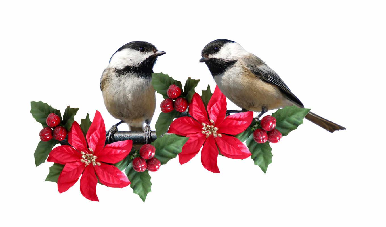 goldfinch, птицы, обои, фото, birds, download, гри