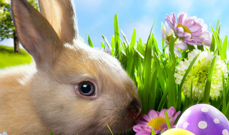 pâques, lapin, des, oeufs, sur, plus, images, photos, parmi, télécharger,