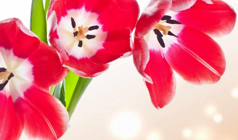 тюльпаны, cvety, kartinka, tulips, flowers, красавица, букет, яркий,