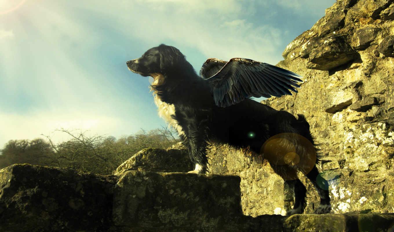 собака, крыльями, собаки,