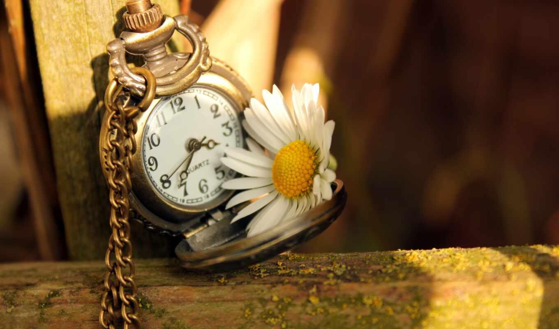 fond, horloge, fleur, daisy, poetry, чё, роза
