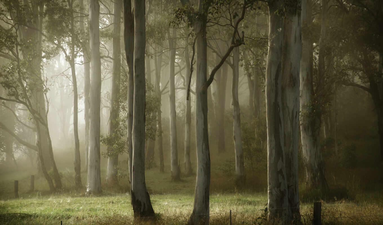 деревья, лето, туман, картинка, картинку,