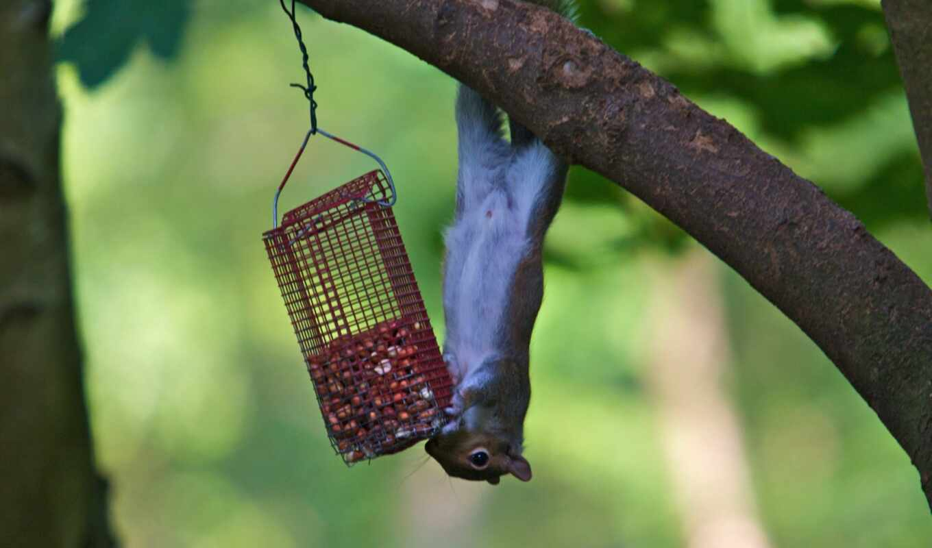 птица, feeder, this, белки, you, proof, двор, squirrels, feeders, бе, birds,