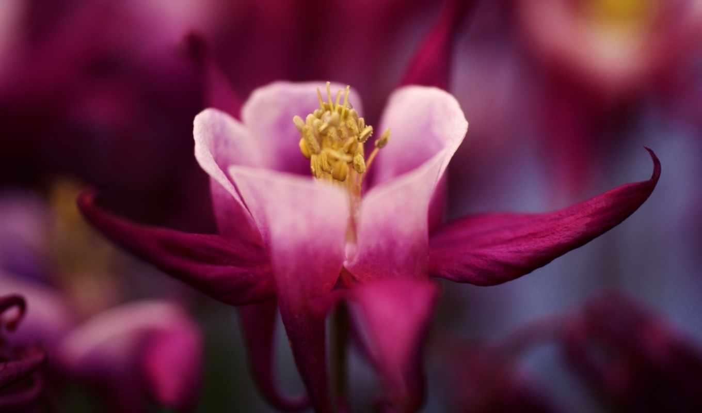цветы, flowers, бордовый,
