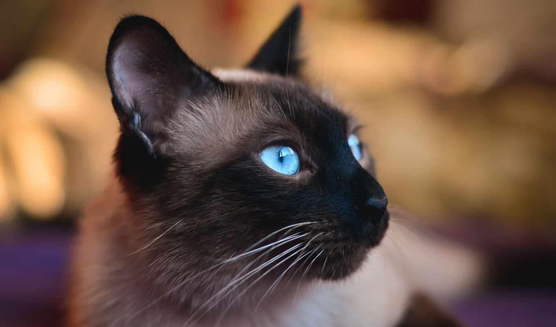 свет, фотообои, chaudhary, фотопанно, manish, фотографий, теме, позе, кот,