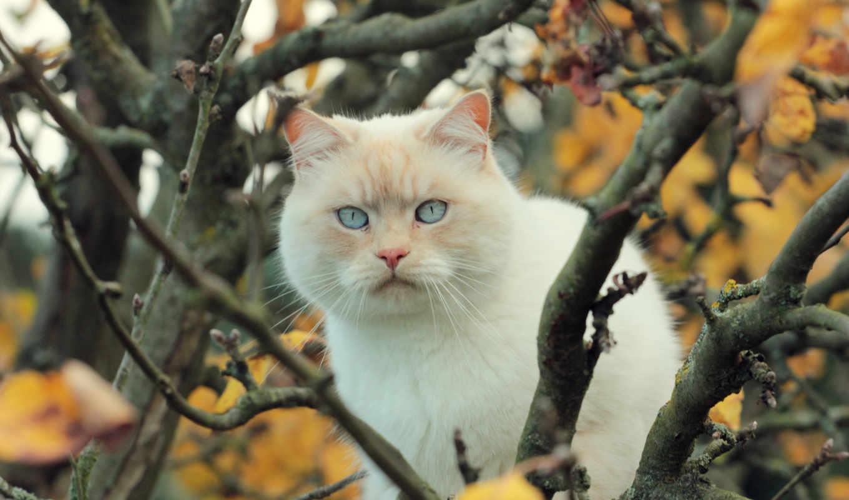 кот, белый, дерево, ветки, листья,