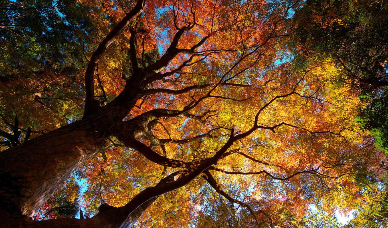 осень, деревя, природа, листва,