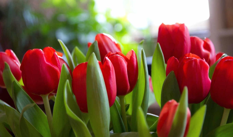 ,flowers, март, природа, red, тюльпаны,