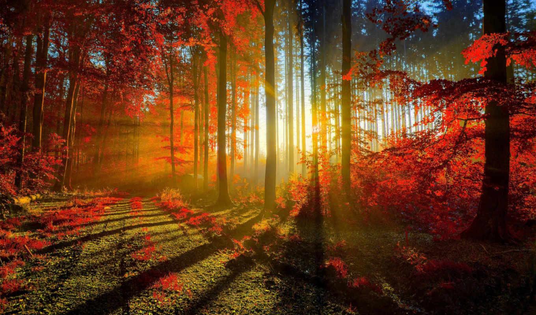 осень, лес, trees, листва, макро, уже, широкоформатные, природа, sun,