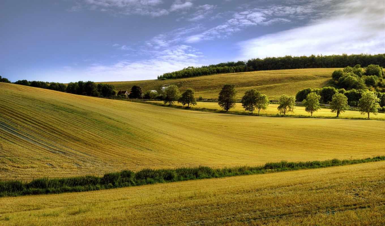 landscape, поле, summer, природа, цветы, картинка, небо, margin,