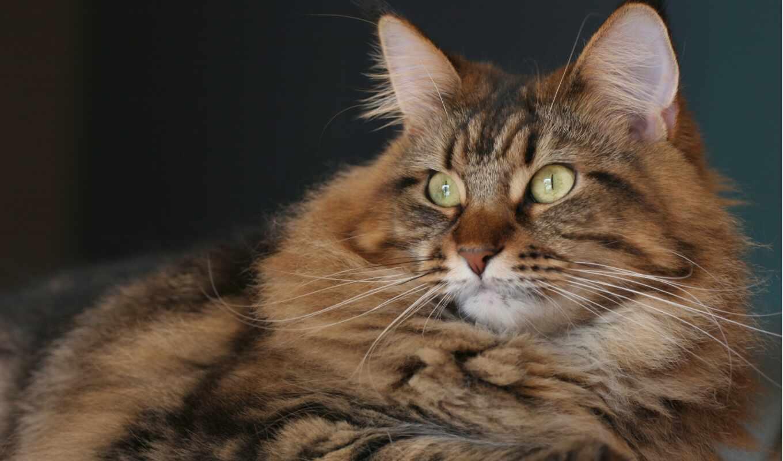 кот, portrait, взгляд, морда, смотреть, mein, свет, kitty