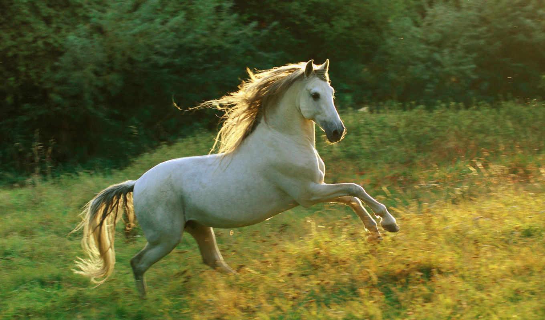 лошади, животные, лошадь,