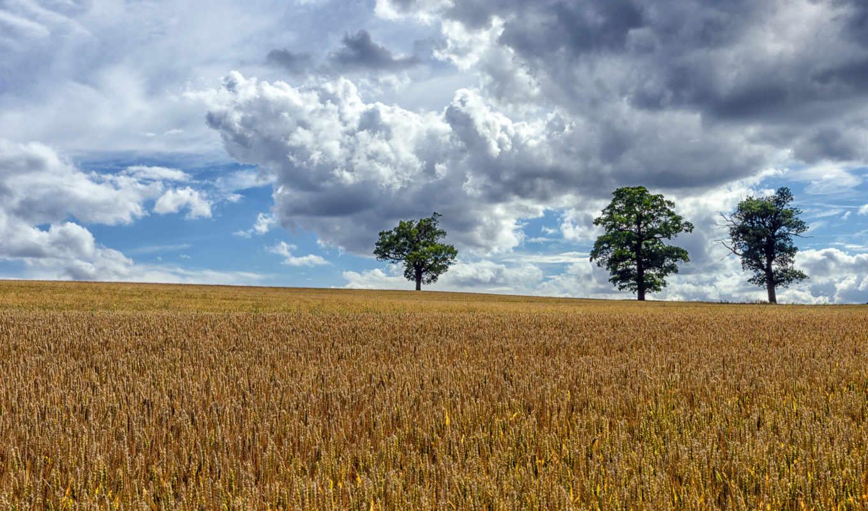 fotos, para, campo, landscape,