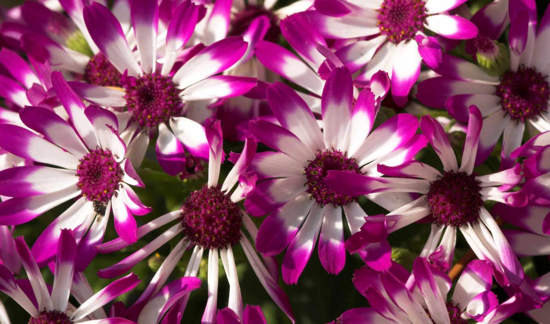цветы, красивые, flowers, purple, сиреневые,