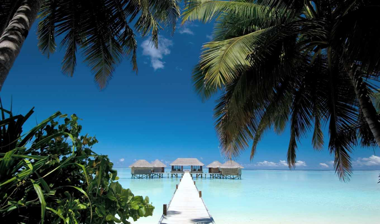 summer, природа, пальмы, бесплатные, мост, пляж, ocean,