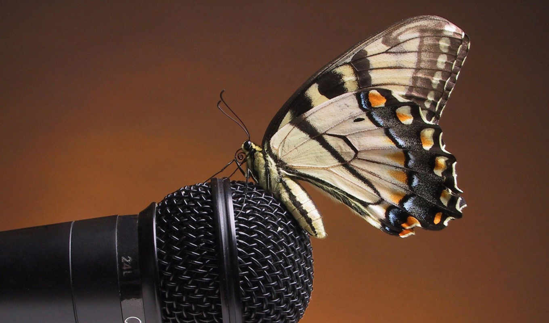 microphone, landing, butterfly, sound, gentle, желтая, resolution, free, use, you, насикомое, butterflies, download, animals, tterfly,