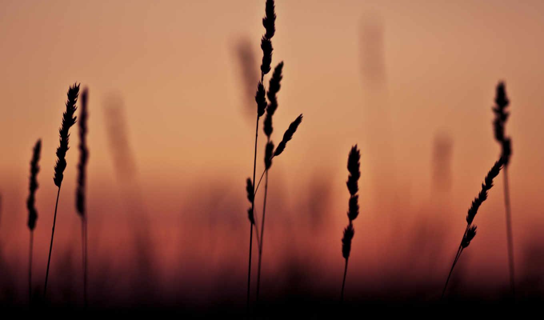sun, nature, blackberry, west, tags, красный,