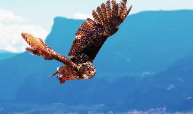 крылья, птицы, животные, совообразные, полет,