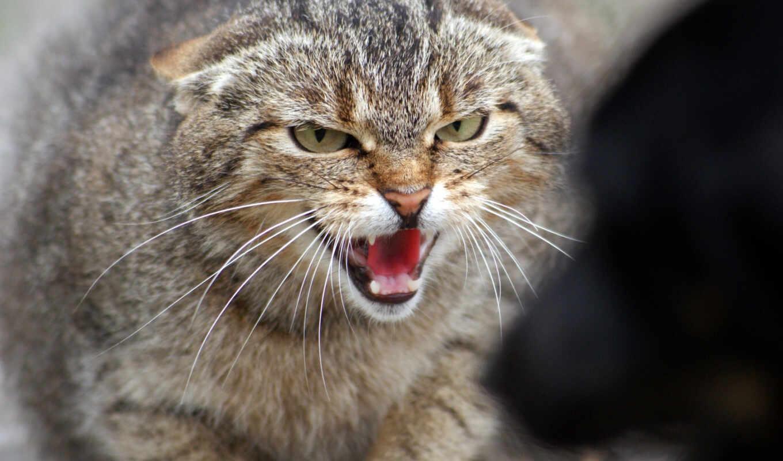 злой, морда, animal, кот, simple, let, school, коты, see