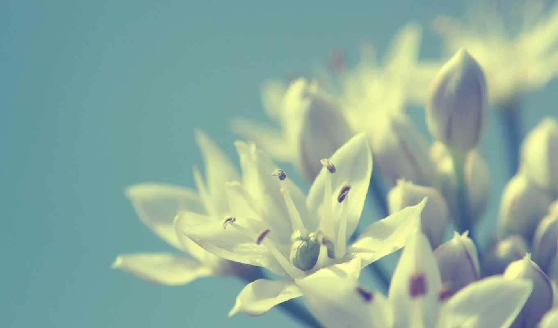 цветы, макро, photo, белые, chat, minus, share, flowers, white,