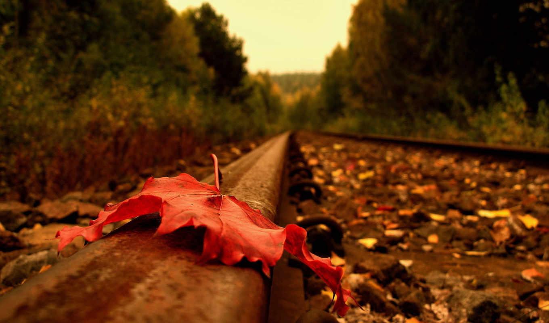 рельсы, лист, дорога, клен, лес, листья,