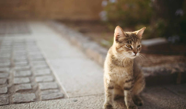 кошек, кот, украсит, компьютера, you, смотреть, предлагаем,