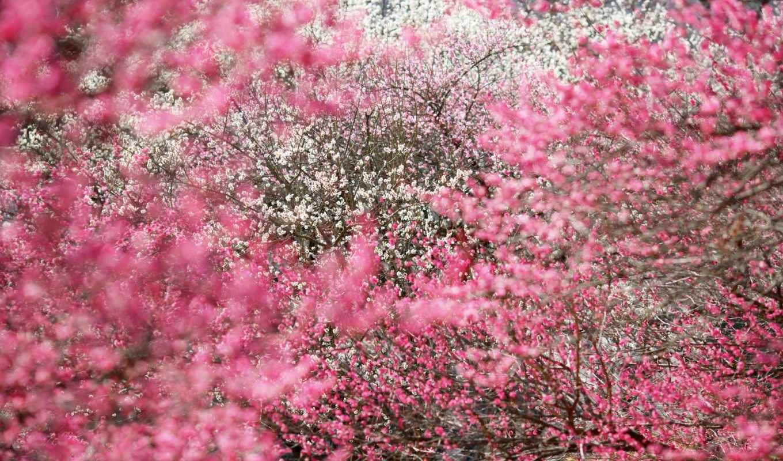 цветы, цвета, flowers, пасть, this,