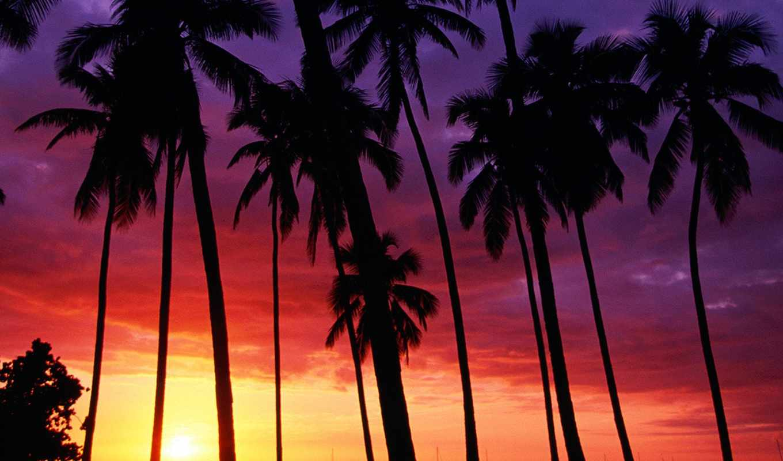palm, закат, trees, дерево, пляж, california, пальмы, tumblr,