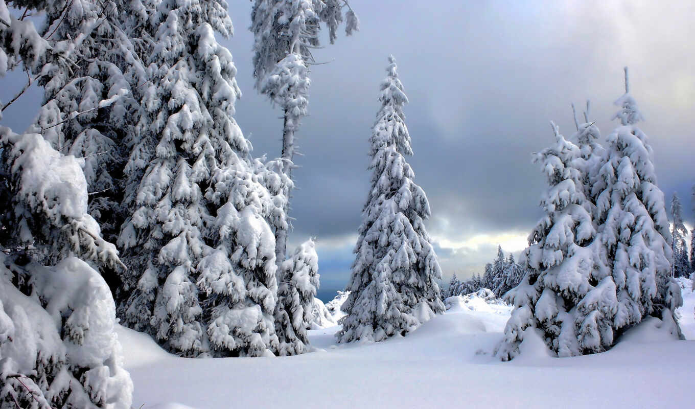 снег, winter, дерево, елка, лес, park, природа, есть, germanii, national