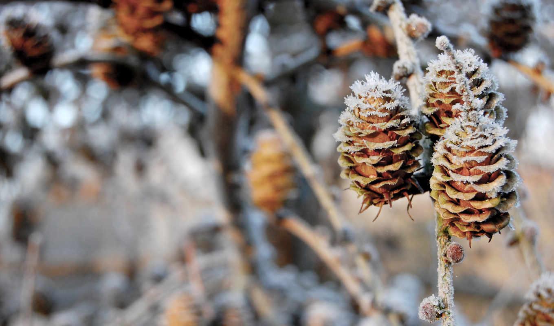 шишки, pinecones, winter, природа, ветки, боке, снег,