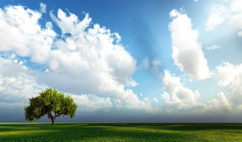 поле, трава, небо,