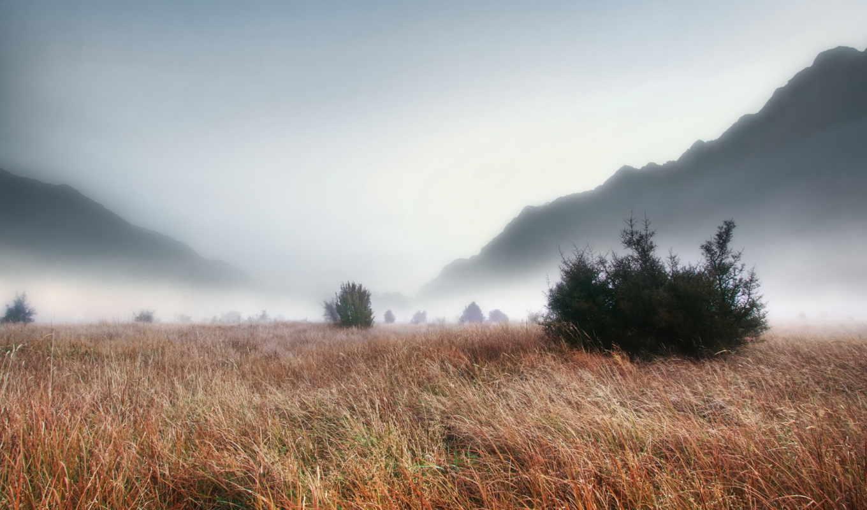 туман, трава, поле, пейзаж, картинка, густой, смотрите,