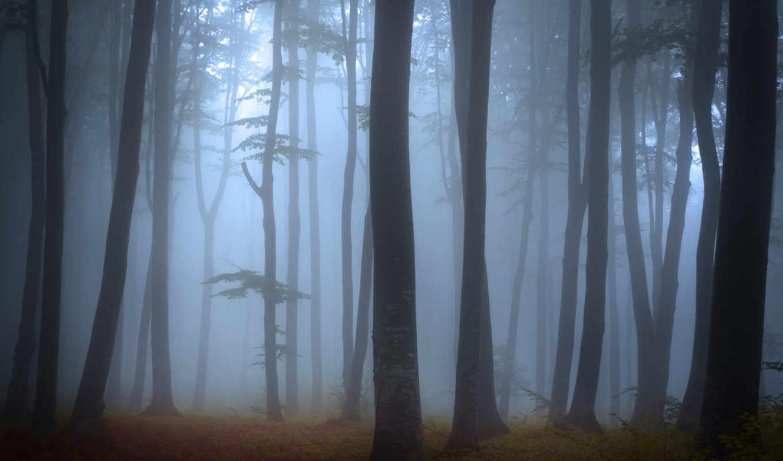 деревя, les, пейзаж, priroda, туман,