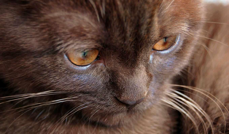 кот, котенок, браун, темно, eyes, усы,