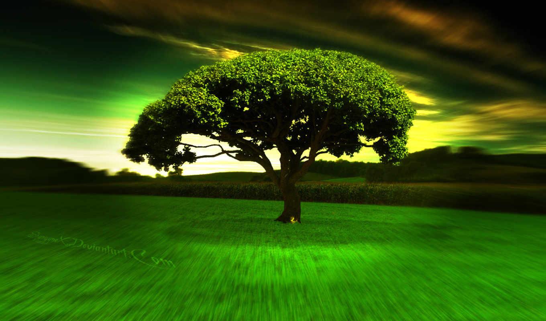дерево, одинокое, among, поля, high, awesome,