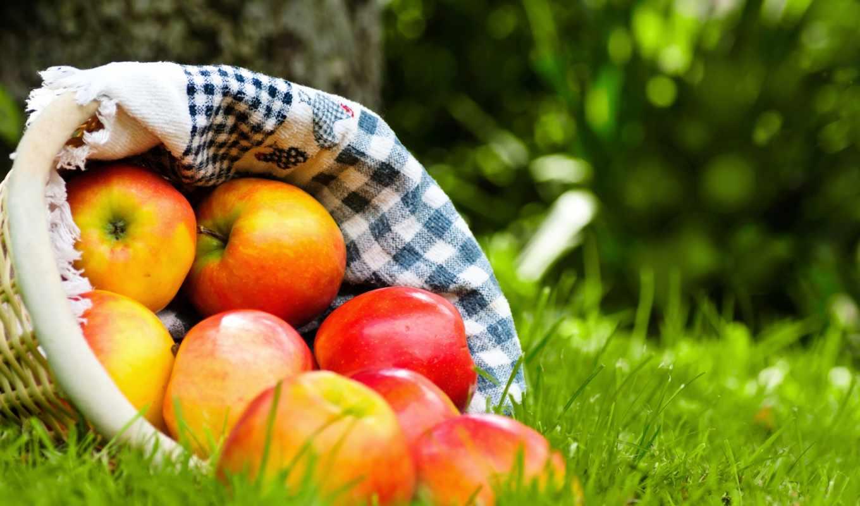 яблоки, корзина, красные, фрукты, трава,