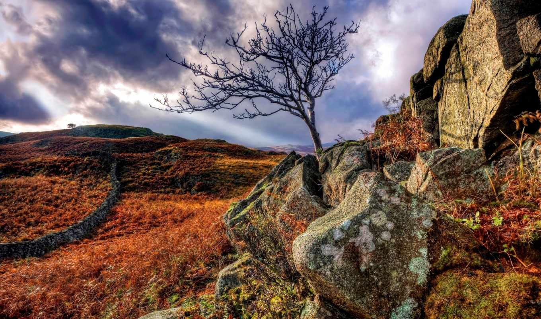 природа, уровень, себе, дерево, заставки,