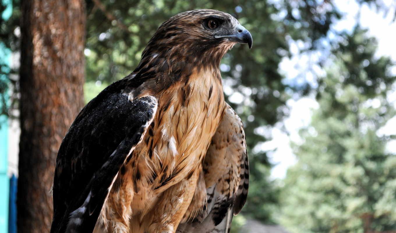 falcon, птица, profile, хищные, количество,