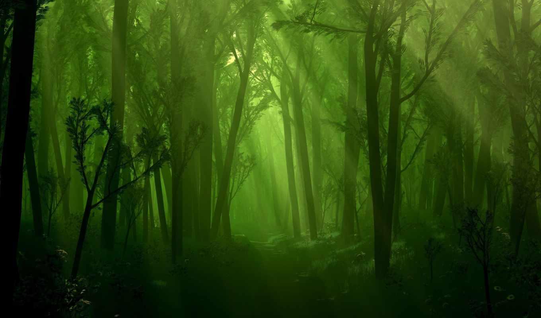 лес, туман, деревя, foggy, ручей,