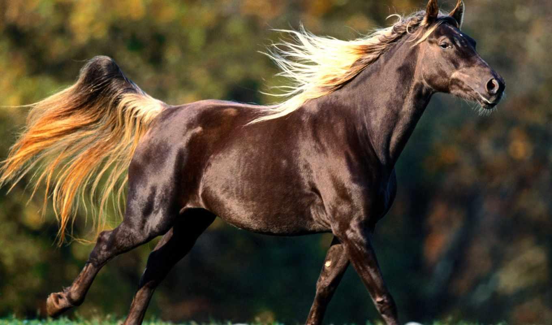 лошадь, лошади, лошадей, зооклубе,