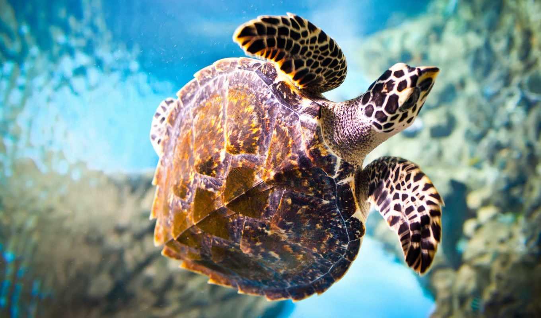 tortue, ecran, fond, мер, fonds, sur, pour, animaux, tortues,
