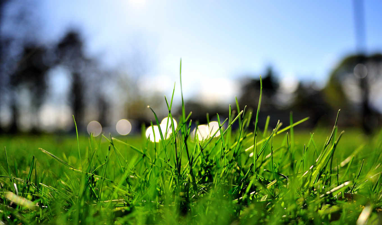 газон, трава, зелёный, текстура,